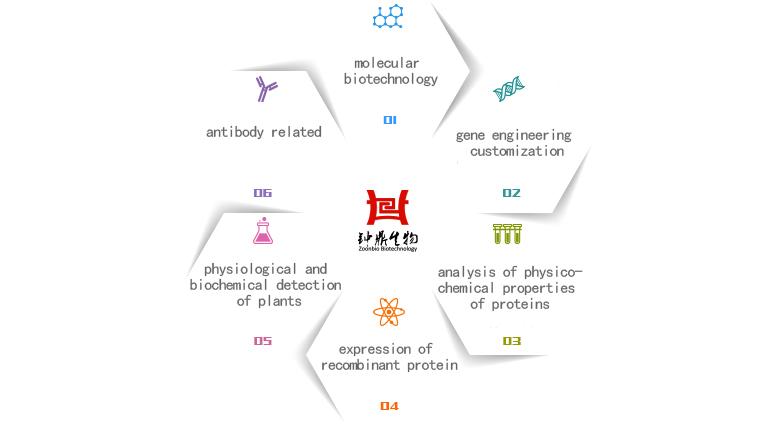 科研技术服务汇总-蛋白重组表达-抗体定制与检测-钟鼎生物