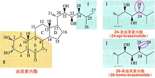 油菜素類酯的結構特點